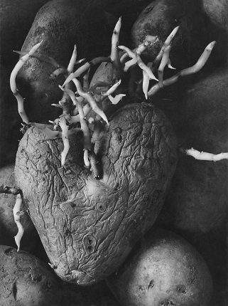 Agnès Varda. 