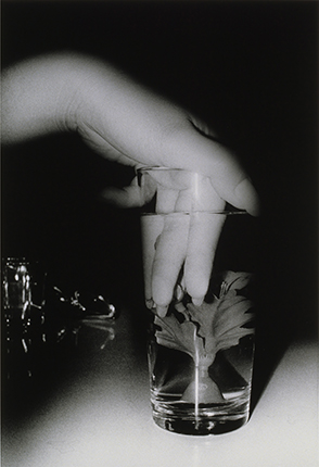 Daido Moriyama. Untitled. 1988. Silver gelatin print. Collection de la Maison Européenne de la Photographie, Paris. Donation de la société Dai Nippon Printing Co. Ltd. Tokyo, Japon